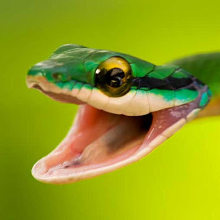 avatars/happy_snake.jpg