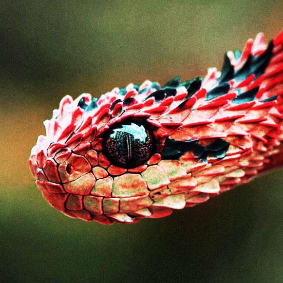avatars/red_snake.jpg