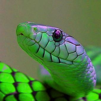 avatars/shiny_snake.jpg